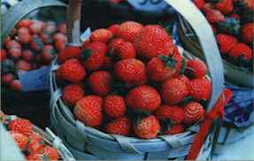 Arnavutkoy Strawberry.